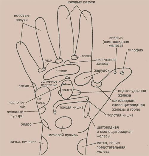 Основные рефлекторные зоны, расположенные на ладони правой руки