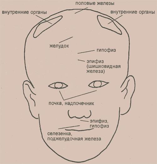 Некоторые рефлекторные зоны, расположенные на голове