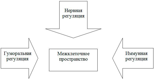 Роль межклеточного пространства