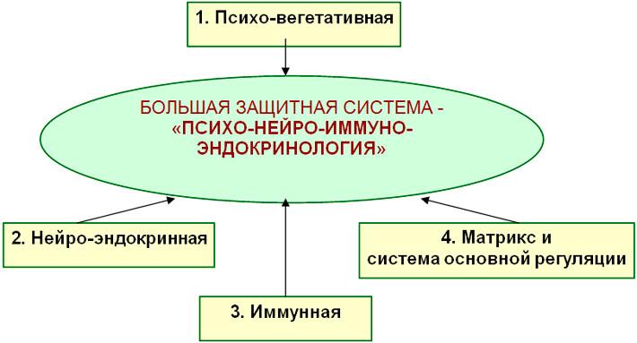 Современное понимание «Большой защитной системы»