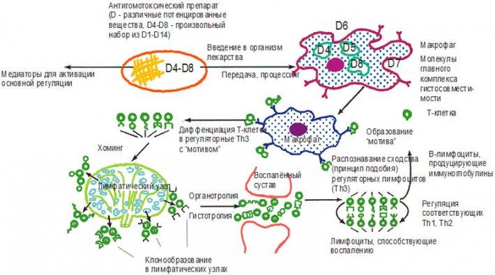 Вспомогательная иммунологическая реакция