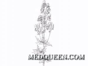 Aconitum veriegatum