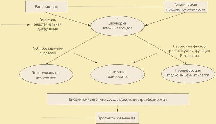 Алгоритм патофизиологических изменений при легочной артериальной гипертензии