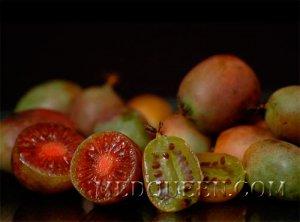 Actinidia purpurea