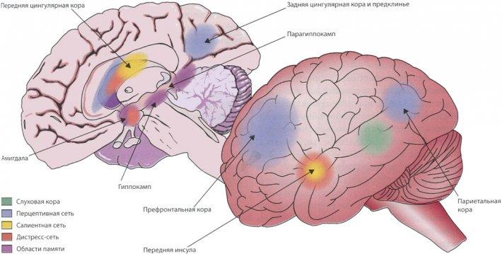 Сети головного мозга, задействованные в механизме фантомного восприятия