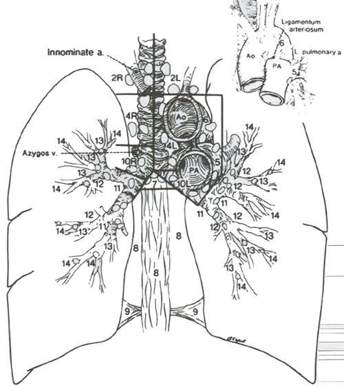 Карта лимфатических узлов