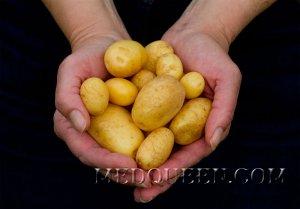 Молодая картошка