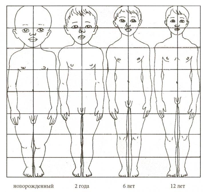 Пропорции тела у ребенка в разном возрасте