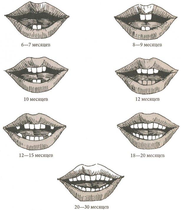 Сроки прорезания молочных зубов