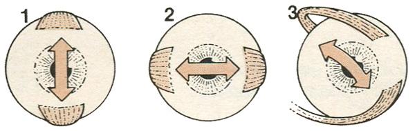 Варианты движения глазного яблока