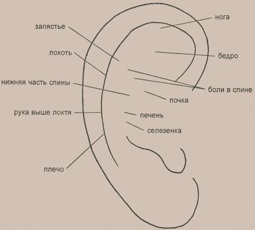 Некоторые рефлекторные зоны, расположенные на ушной раковине
