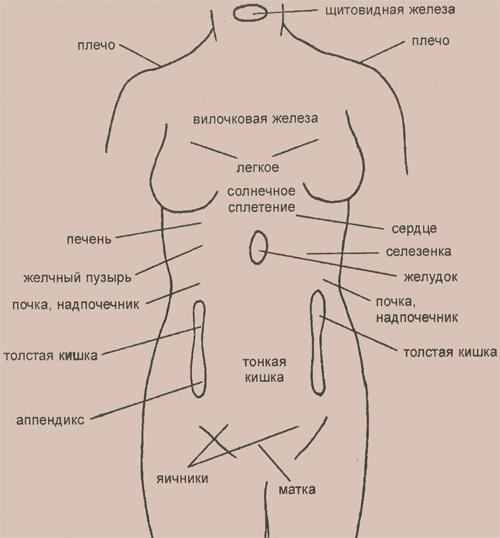 Основные рефлекторные зоны, расположенные на туловище (у женщин)