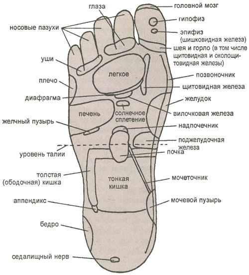 Основные рефлекторные зоны, расположенные на подошве правой ноги
