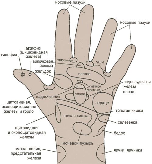 Основные рефлекторные зоны, расположенные на ладони левой руки