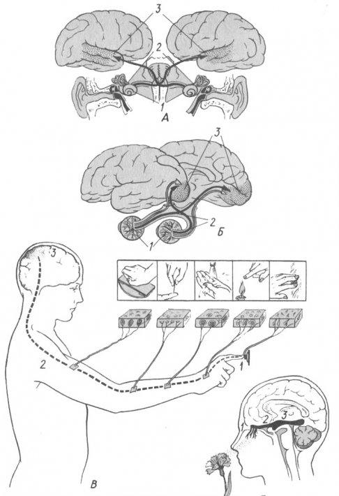 Схема анализаторов