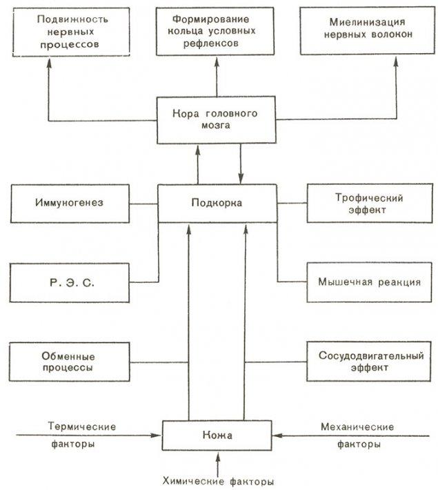Взаимодействие функциональных систем организма при закаливании