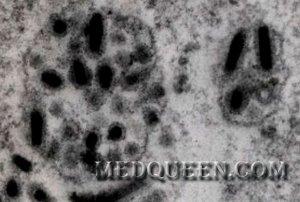 Цитопатология