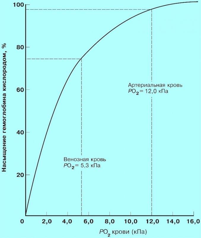 Содержание кислорода в организме