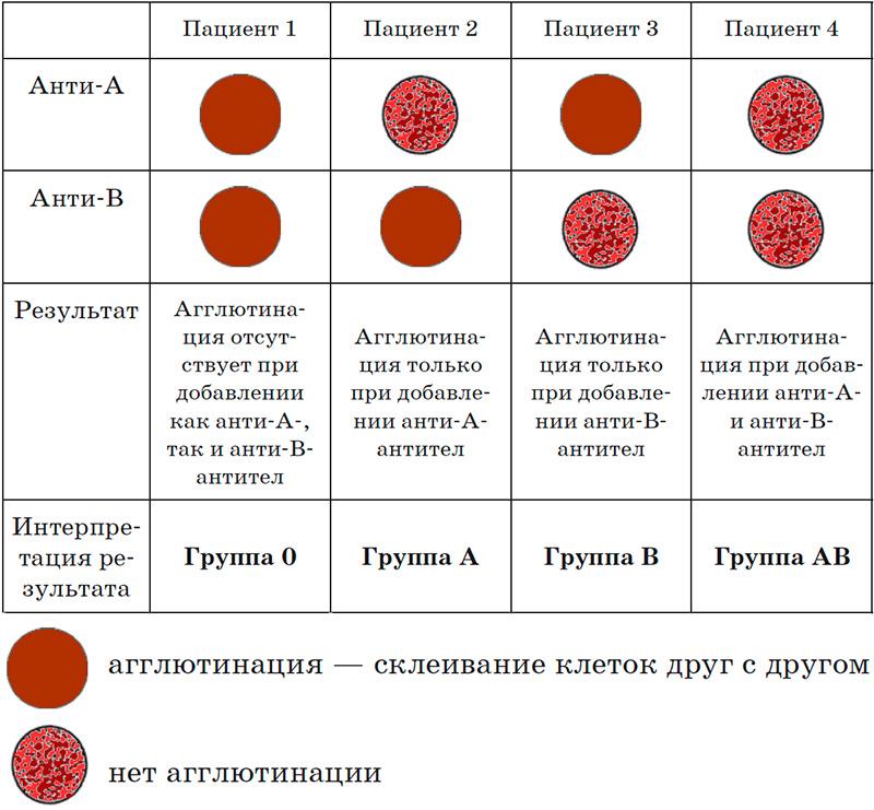 Определение группы крови по системе AB0