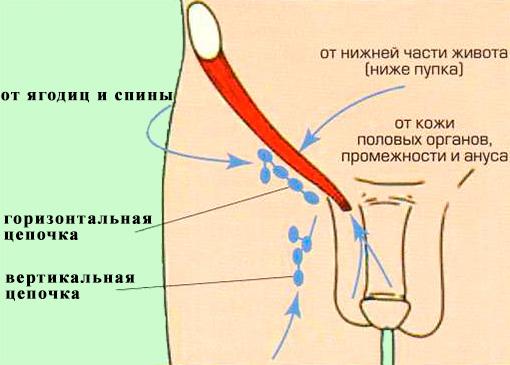 Лимфоузлы нижних конечностей
