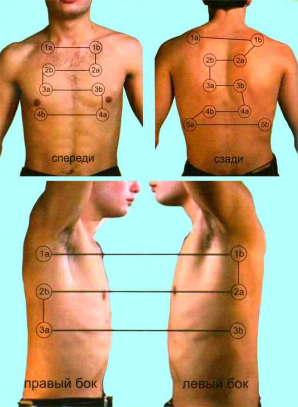 Порядок перкуссии и аускультации легких
