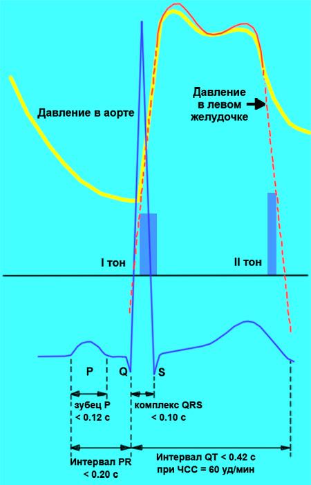 Тоны сердца, зубцы электрокардиограммы и пульсовой волны