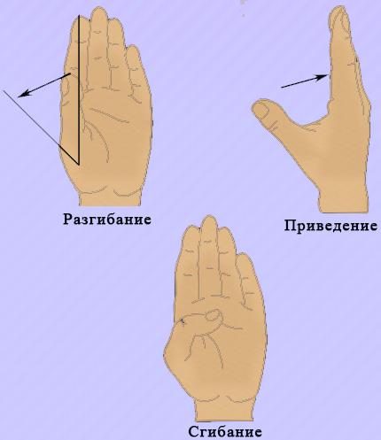 Движение большого пальца кисти