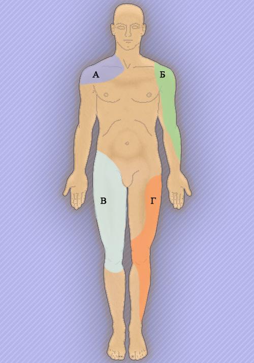 Общие принципы обследования суставов и мышц