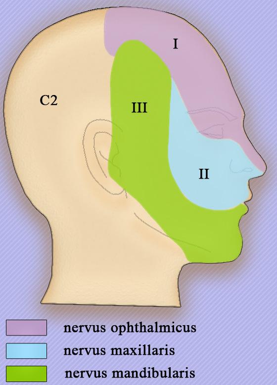Периферические нервы тройничного нерва