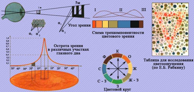 Центральное и цветовое зрение